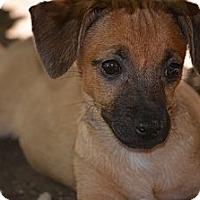 Adopt A Pet :: Alfred - Fresno, CA