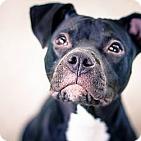 Adopt A Pet :: Iris - Seattle, WA