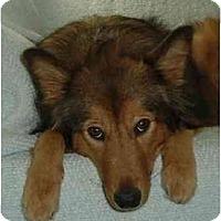 Adopt A Pet :: Tessa - Indiana, IN