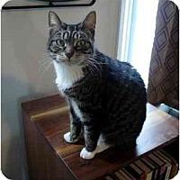 Adopt A Pet :: Honey Bunny - New York, NY
