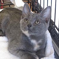Adopt A Pet :: Aubrey - Berkeley Hts, NJ