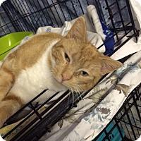 Adopt A Pet :: Sherman - Byron Center, MI