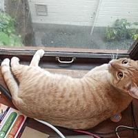 Adopt A Pet :: Oswald - Oakland, CA
