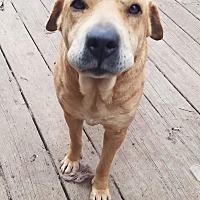 Adopt A Pet :: Maisie - Charlestown, RI
