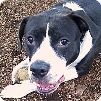 Adopt A Pet :: Zoey Luv - Scottsdale, AZ