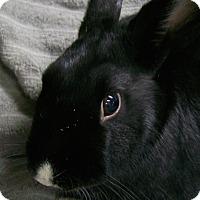 Adopt A Pet :: Justin - Harrisburg, PA