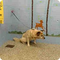 Adopt A Pet :: URGENT on 8/11 SAN BERNARDINO - San Bernardino, CA