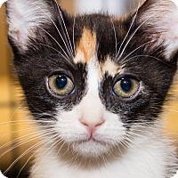 Adopt A Pet :: Roxy - Irvine, CA