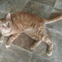Adopt A Pet :: Carolina - Des Moines, IA