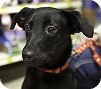 Terrier (Unknown Type, Small) Mix Dog for adoption in Loudonville, New York - Bella