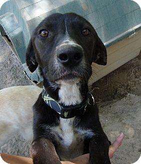 Labrador Retriever Mix Dog for adoption in Daleville, Alabama - Dorthy