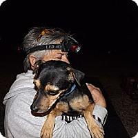 Adopt A Pet :: Mandan - Lucerne Valley, CA
