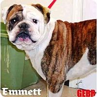 Adopt A Pet :: Emmett - Winder, GA