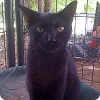 Adopt A Pet :: Lakota - Monroe, GA
