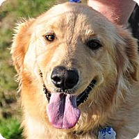 Adopt A Pet :: Charlie - New Canaan, CT
