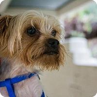 Adopt A Pet :: Theodore - Mission Viejo, CA