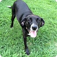 Adopt A Pet :: Darlin - Bedminster, NJ