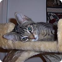Adopt A Pet :: Pru - Richmond, VA