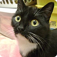 Adopt A Pet :: Mumm - Middletown, OH