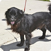 Adopt A Pet :: Dakota - Meridian, ID