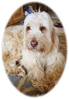Terrier (Unknown Type, Medium) Mix Dog for adoption in Washington, D.C. - Kipper
