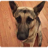 Adopt A Pet :: Jax - Prospect, CT