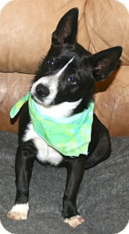 Mixed Breed (Small) Mix Dog for adoption in Pilot Point, Texas - Diego