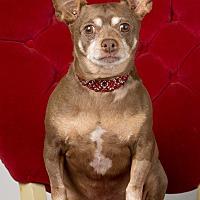 Adopt A Pet :: Freddy - Garland, TX