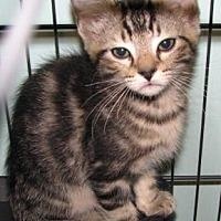 Adopt A Pet :: Cooper - Las Cruces, NM