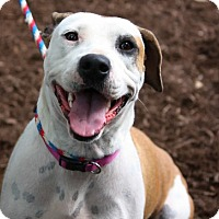 Adopt A Pet :: Daisy in CT - East Hartford, CT
