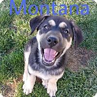Adopt A Pet :: Montana - Hesperia, CA