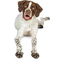 Adopt A Pet :: Hunter - Scottsdale, AZ