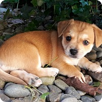 Adopt A Pet :: Frannie - Salem, OR