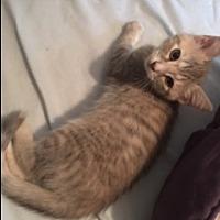Adopt A Pet :: Flip Flop - Smyrna, GA
