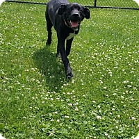 Adopt A Pet :: Boone - Valparaiso, IN