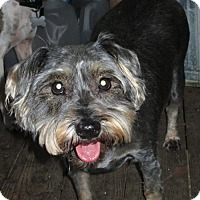 Adopt A Pet :: MITZI - Lincolndale, NY
