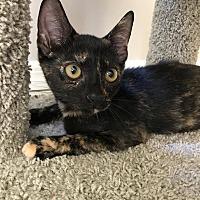 Adopt A Pet :: Phoebe - Smithtown, NY