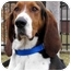 Photo 1 - Treeing Walker Coonhound Mix Dog for adoption in Overland Park, Kansas - Tilly