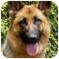 Photo 1 - German Shepherd Dog Mix Dog for adoption in Los Angeles, California - Tiffany von Tauben