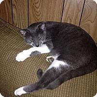 Adopt A Pet :: Cami - Baton Rouge, LA