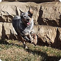 Adopt A Pet :: Candy - Fort Riley, KS