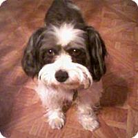 Adopt A Pet :: Fluffy - Plainfield, CT