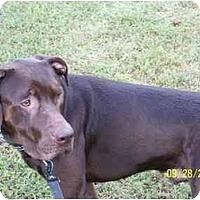 Adopt A Pet :: Tyler - York, SC