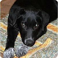Adopt A Pet :: Phoenix - Glenpool, OK