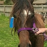 Quarterhorse Mix for adoption in Hitchcock, Texas - Breeze