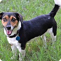 Adopt A Pet :: *Happy Abby - PENDING - Westport, CT