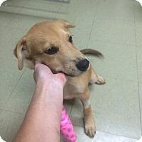 Adopt A Pet :: Oliver - Fair Oaks Ranch, TX