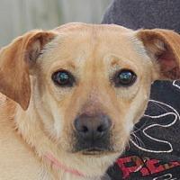 Adopt A Pet :: Chance  Lower fee!  Great Dog! - Yardley, PA