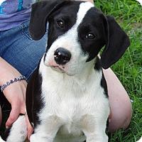 Adopt A Pet :: Talulah (25 lb) Video! - Sussex, NJ