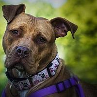 Adopt A Pet :: OC - Crete, IL